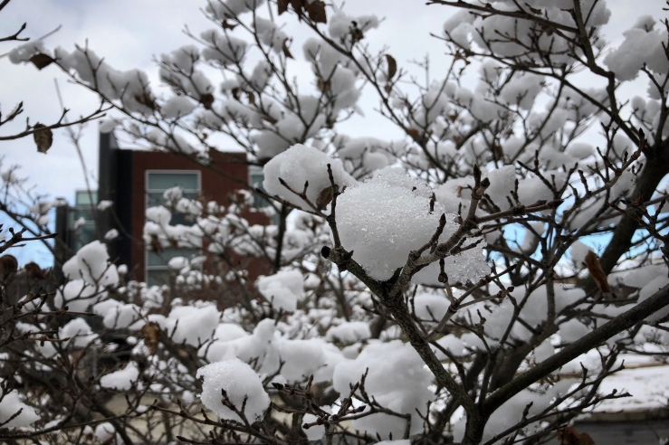 snow-cotton-marywood